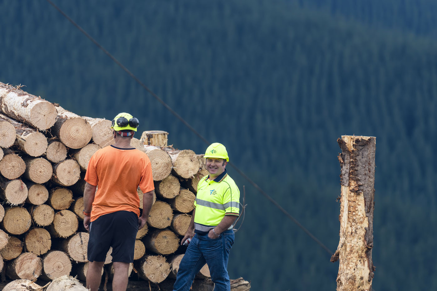 Submission to the Forests (Regulation of Log Traders and Forestry Advisers) Amendment Bill, New Zealand.