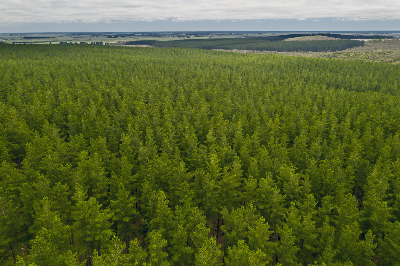 Forestry access to fund a win for regional communities